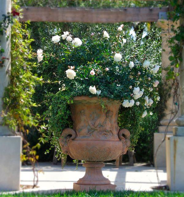 Мини-розы как посадить