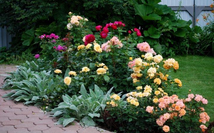 Композиция из разных роз