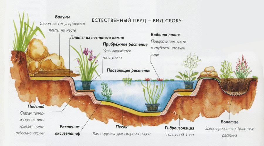 Вопросы по обустройству пруда