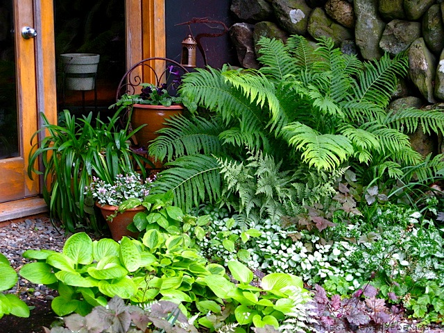 Папоротник садовый в ландшафтном дизайне