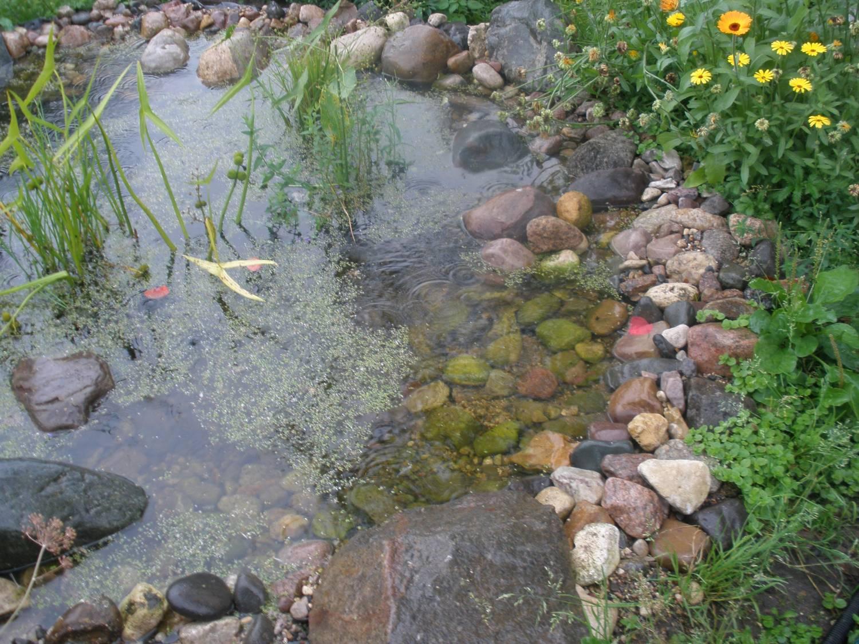 как сделать пруд для разведения рыбы на даче своими руками