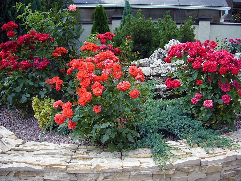 Клумба своими руками с розами из фото 490