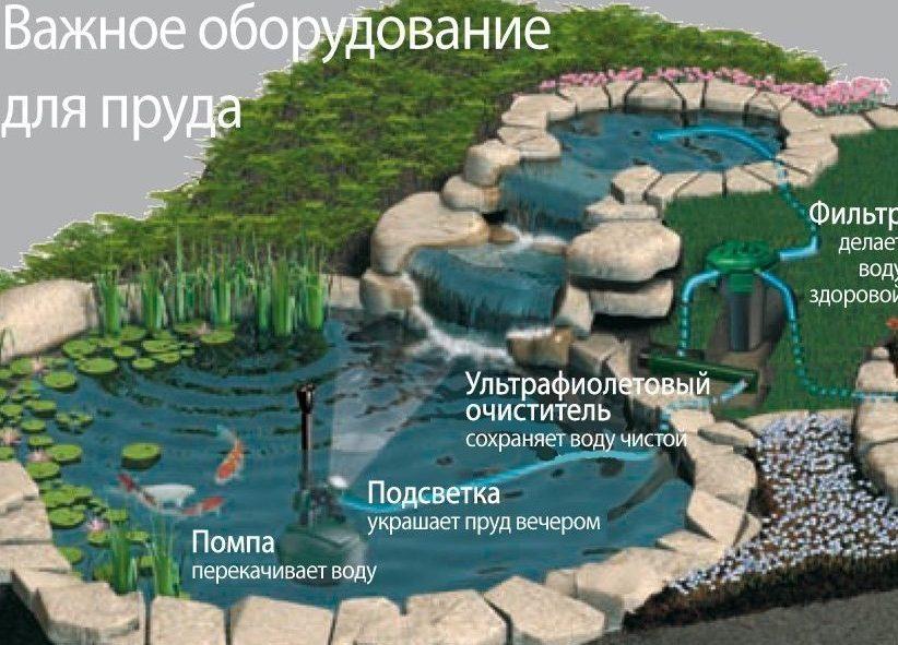 Разведение карпов в пруду на даче: водоем для карпов