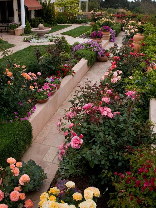 Розы вдоль тропинки