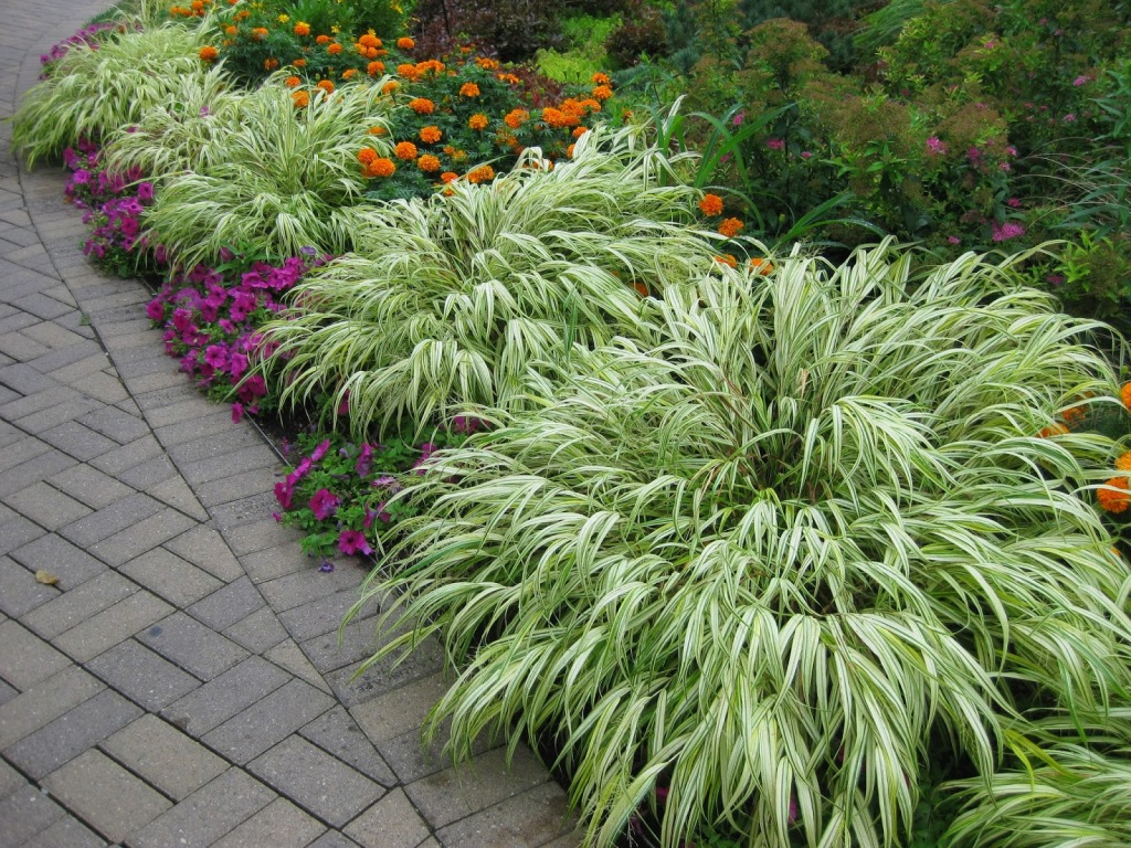 Хаконехлоя – украшение водоема и сада в японском и не очень японском стиле
