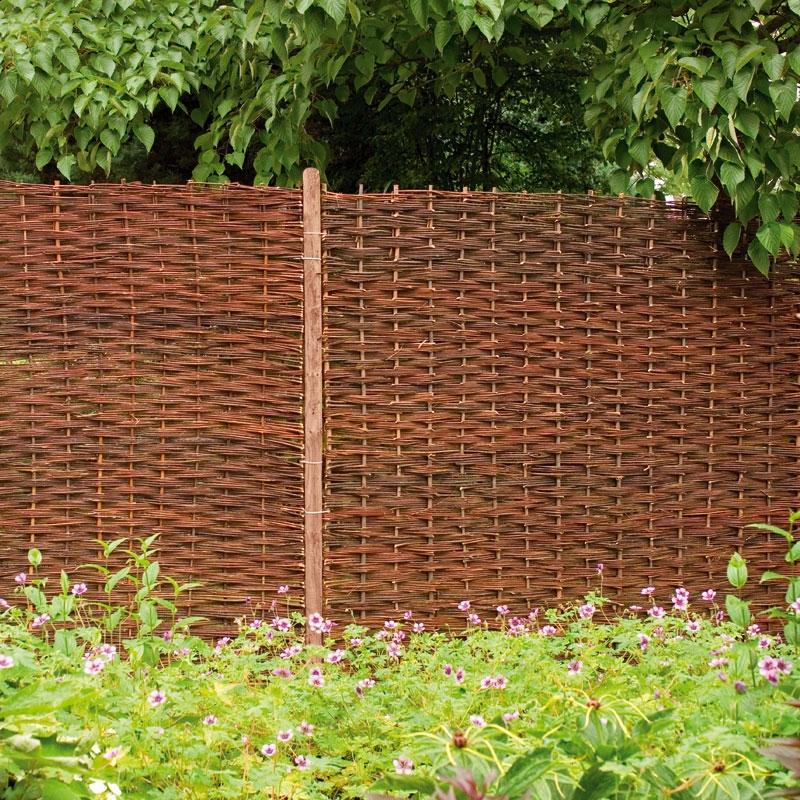 ива плетенка забор