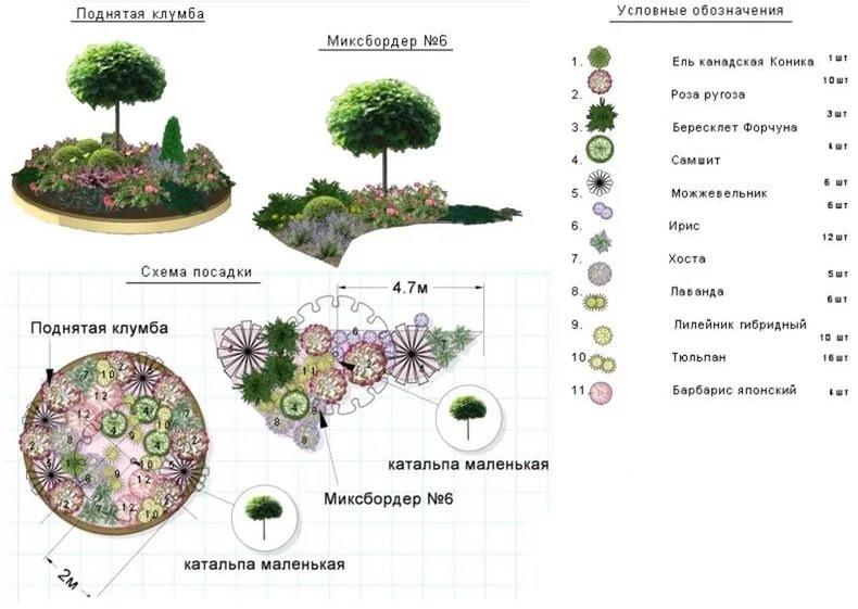 Что посадить вдоль забора на даче: деревья, кусты, растения, варианты на фото