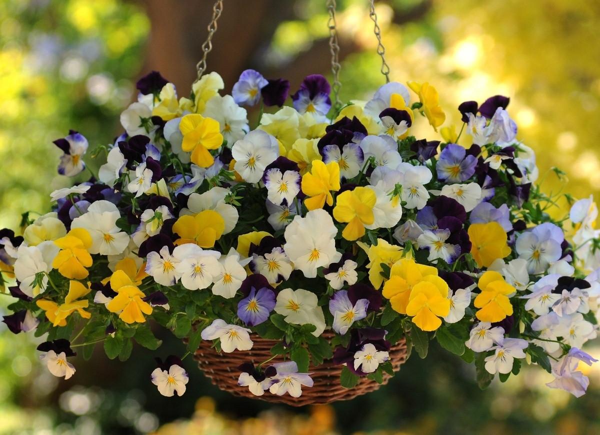 Рассада однолетних цветов, каталог однолетников, купить оптом