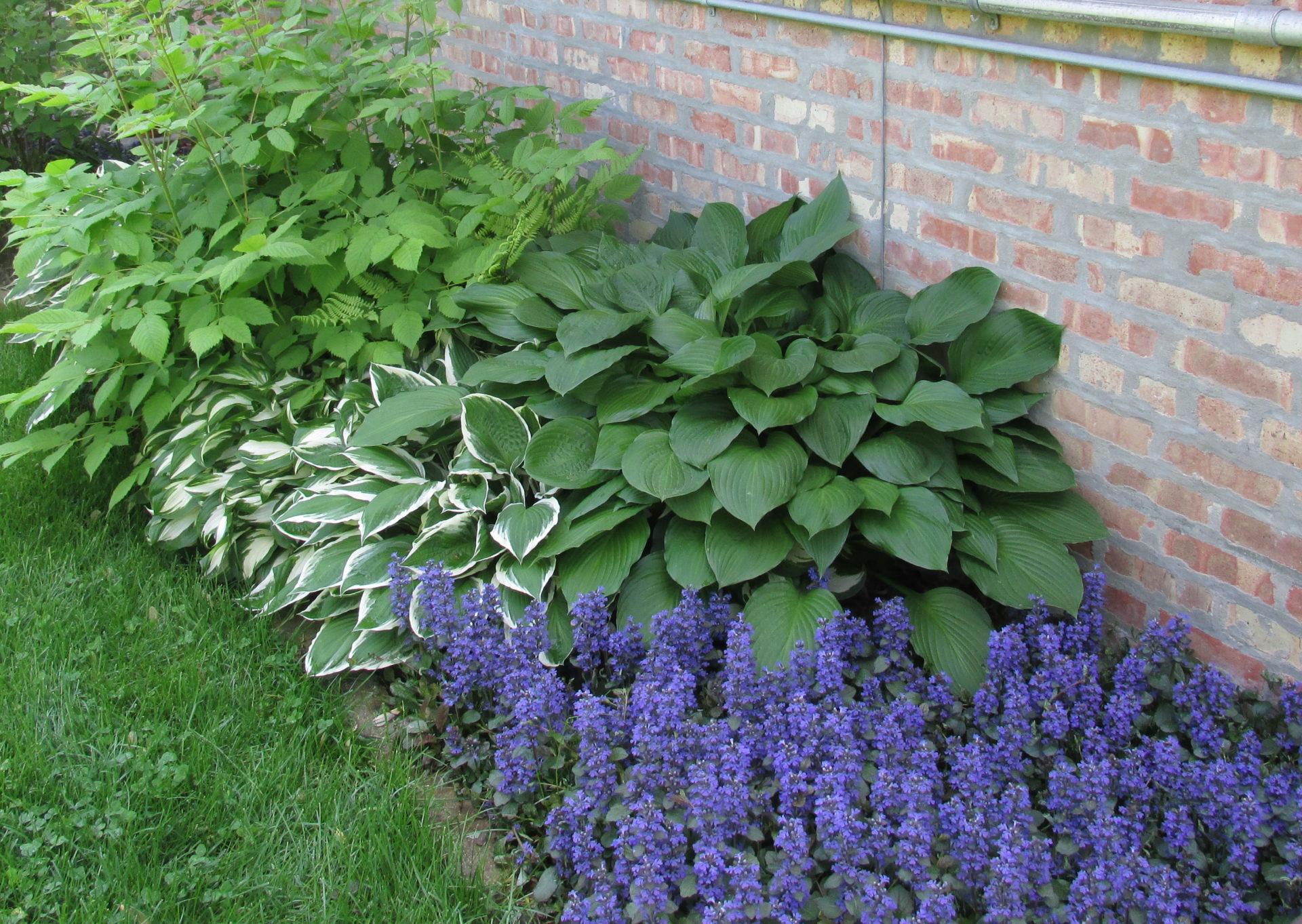 Растения и цветы для палисадника