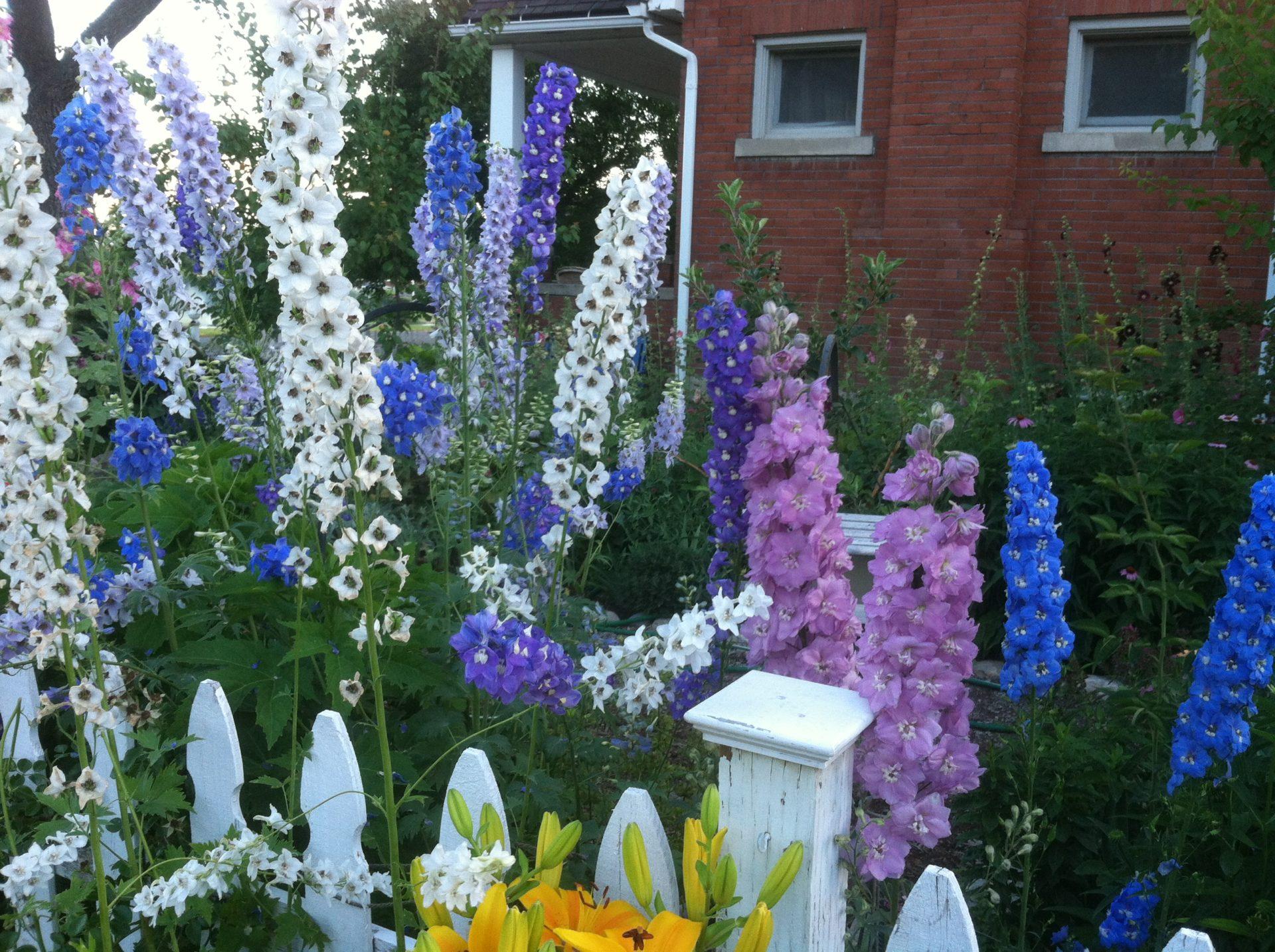 Фото цветов для палисадника и их название