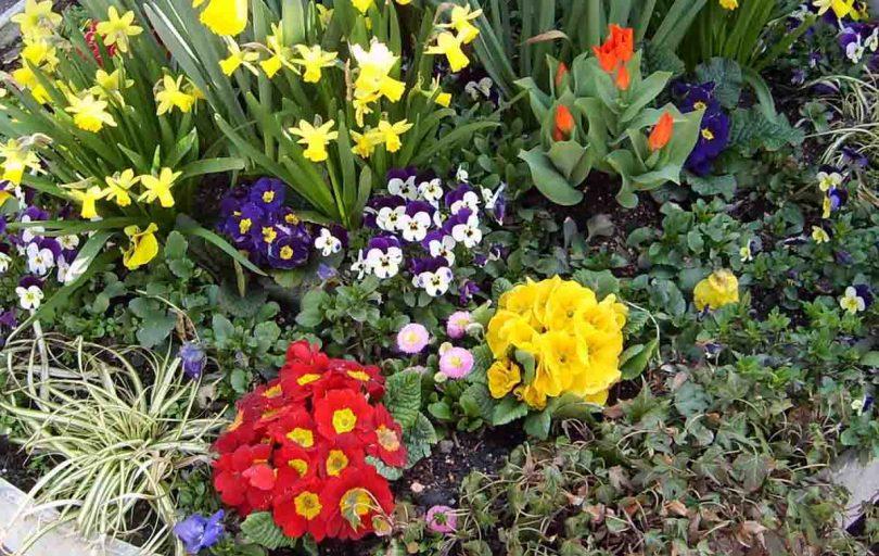 Фото многолетних весенних цветов