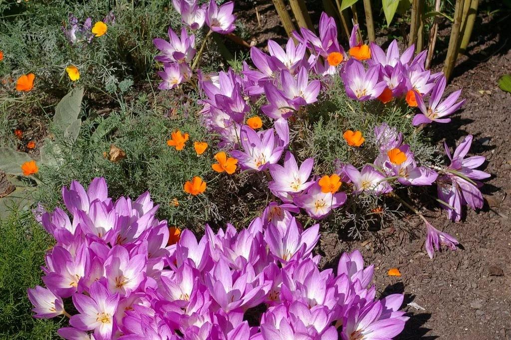 Осенний вальс, или Фиолетовые звезды в траве
