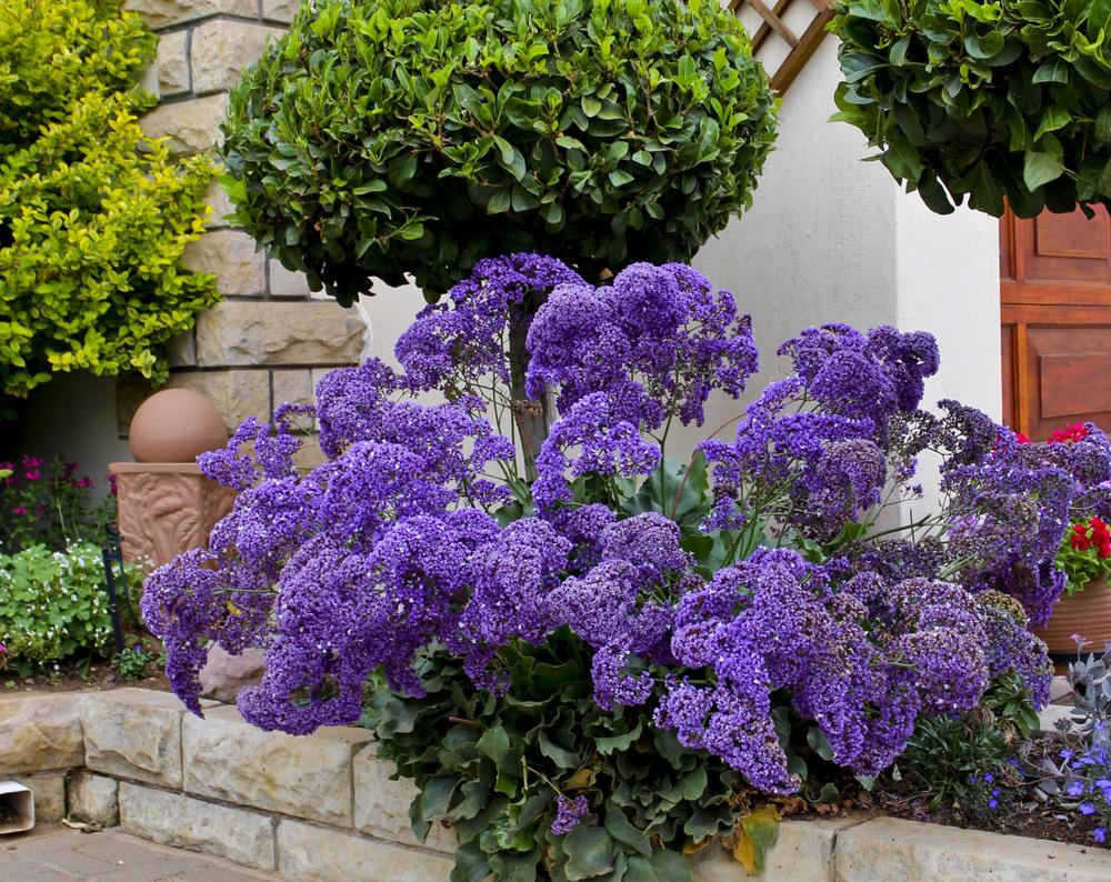 Статица фото цветов