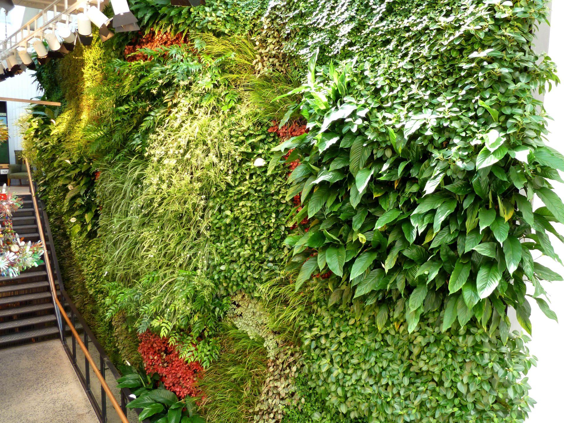 Вертикальное озеленение в квартире своими руками фото фото 421