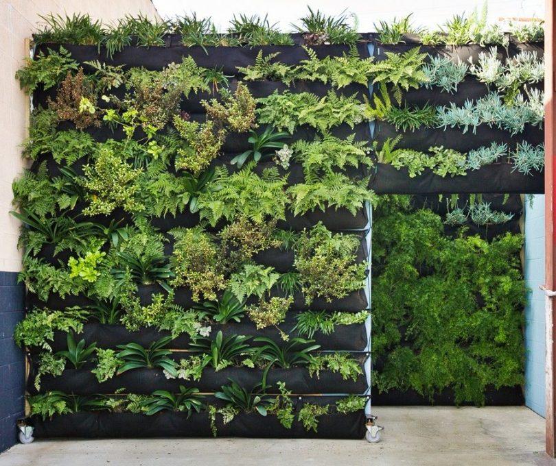 Вертикальное озеленение в квартире своими руками фото фото 882