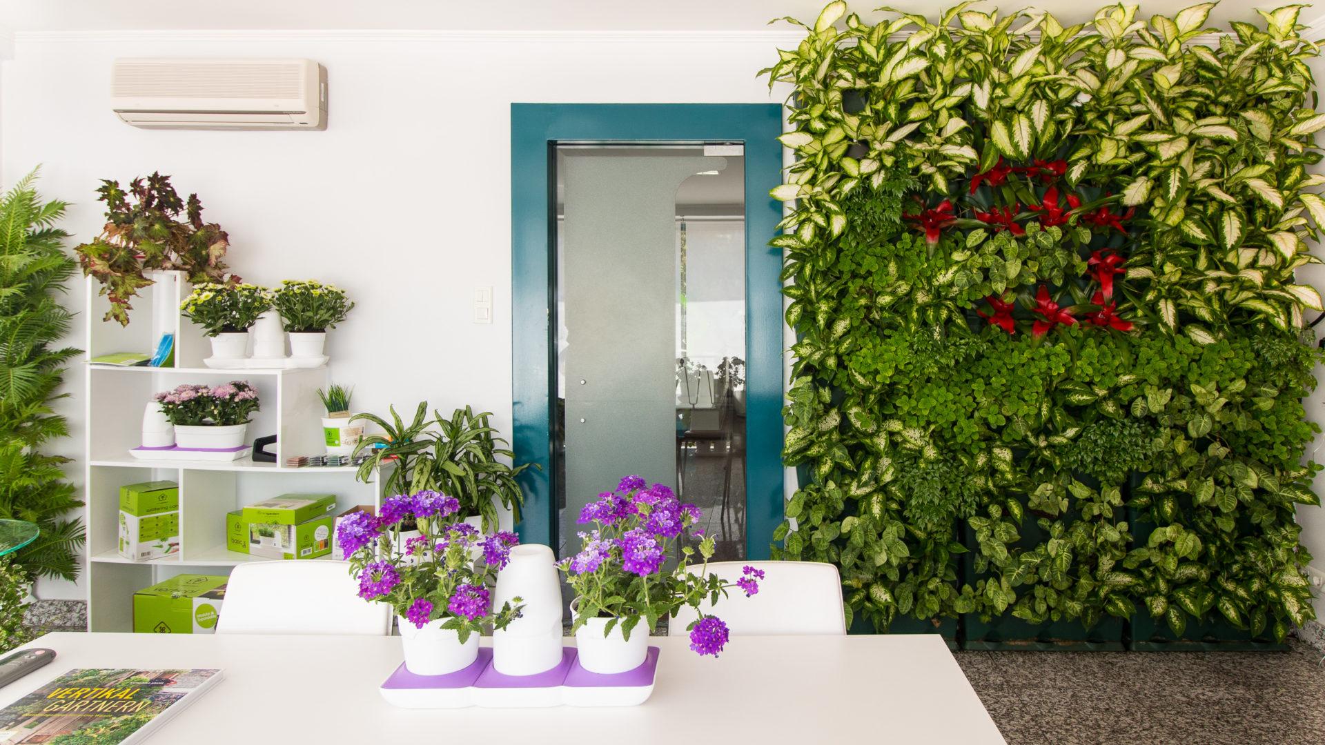 Вертикальное озеленение в квартире своими руками фото фото 389