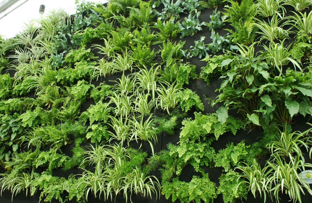 Вертикальное озеленение в квартире своими руками фото фото 846