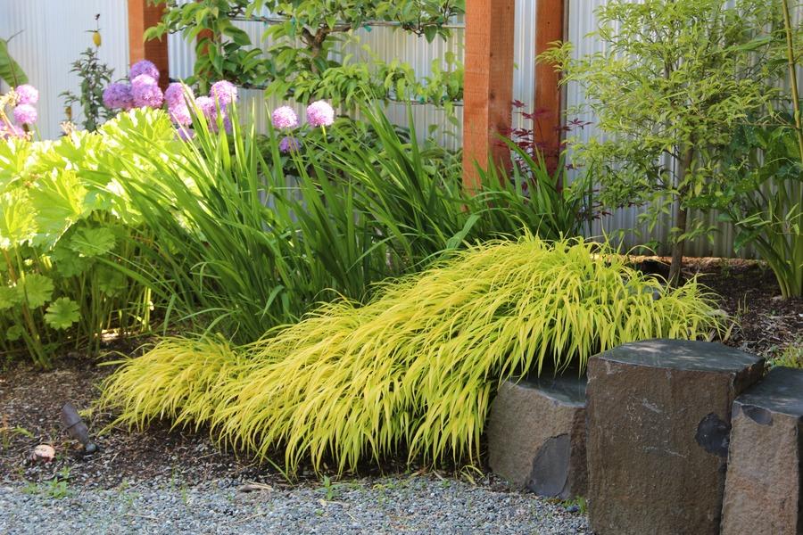 Базальтовые камни, дополненные японской травой Хаконехлоей, Аллиумами и крокосмией.