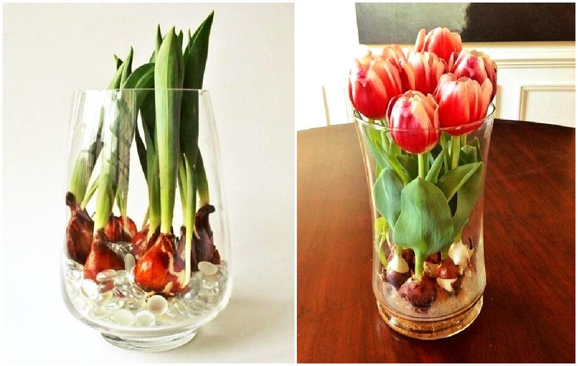 Сажать тюльпаны в доме 115