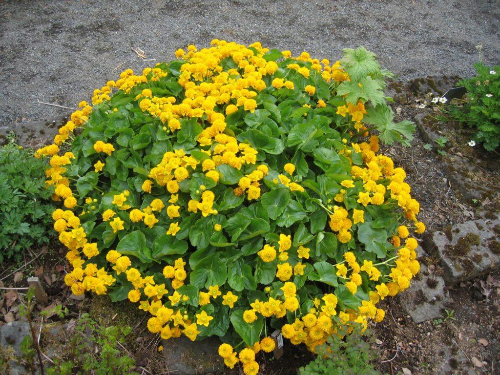 Цветы для клумбы в тени, цветущие все лето