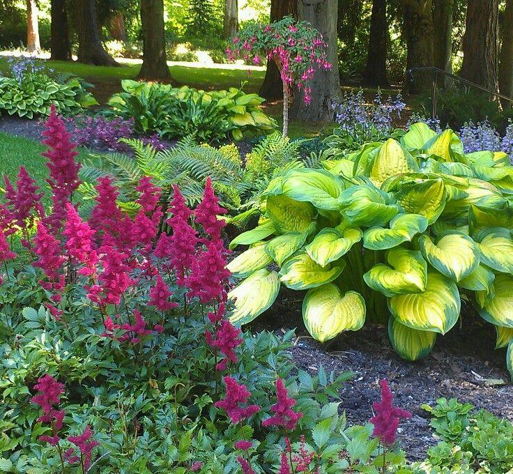 22 Tree Shade Landscaping Ideas For Your Yards: Цветы для тени цветущие все лето или что посадить на