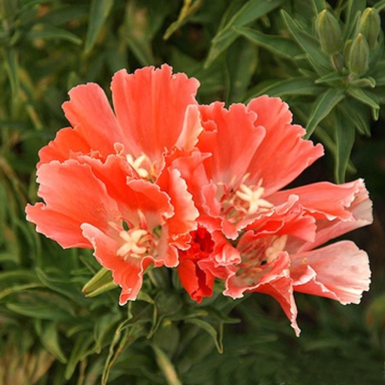 Клумбы из низкорослых сортов цветов 61