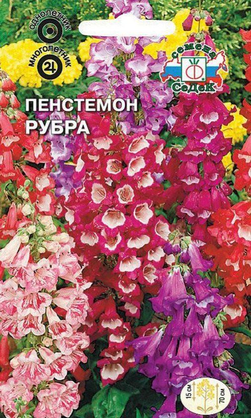 """Пенстемон - победитель в номинации """"Разнообразие"""""""