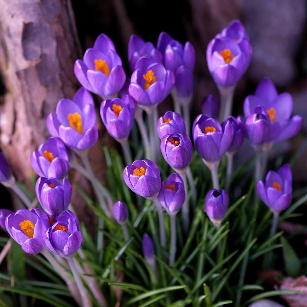 Список весенних цветов фото
