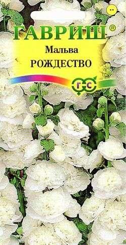 Выращивание шток-розы из семян, когда сажать и как добиться цветения в первый год