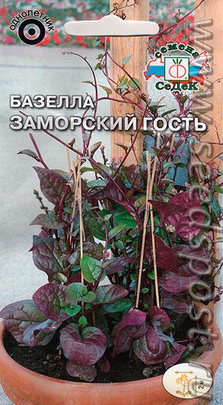 Заморский гость базелла - красивая и вкусная лиана