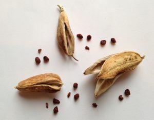 Ирисы: посадка, выращивание и уход в открытом грунте