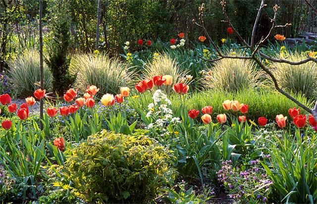 Декоративные злаки для сада: вейник