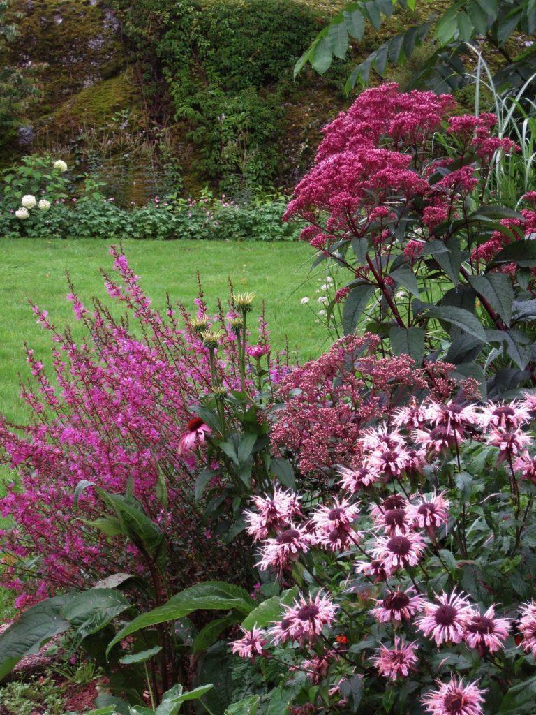 Посконник - серебряные краски в палитру сада