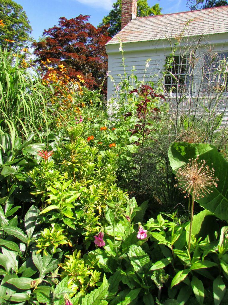 """Необычная """"наперстянка"""" Реймания: выращивание из семян, посадка и уход"""