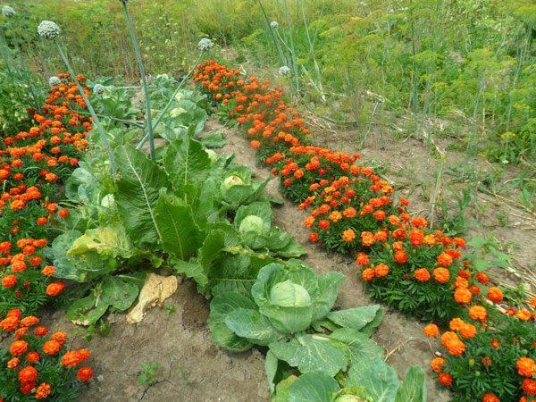 Дизайн сада и огорода - как превратить участок в шедевр?