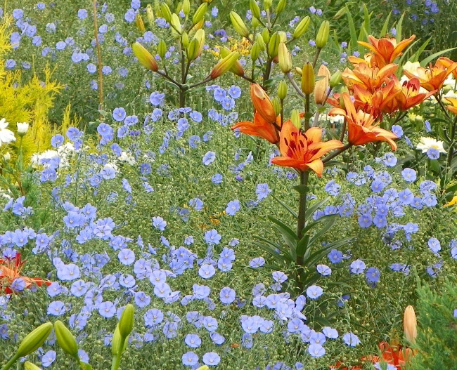 Интернетмагазин цветов ГрандФлора с доставкой по России