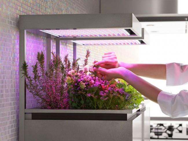 Растения под искусственным освещением