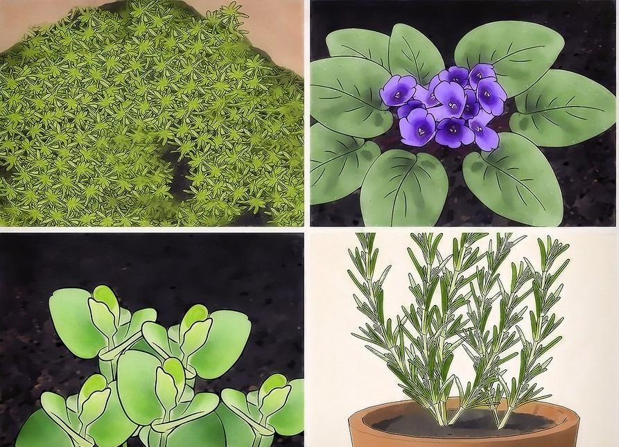 Растения, подходящие для мини-садика