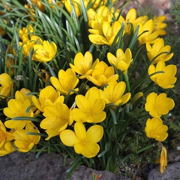 Растения сажают группами