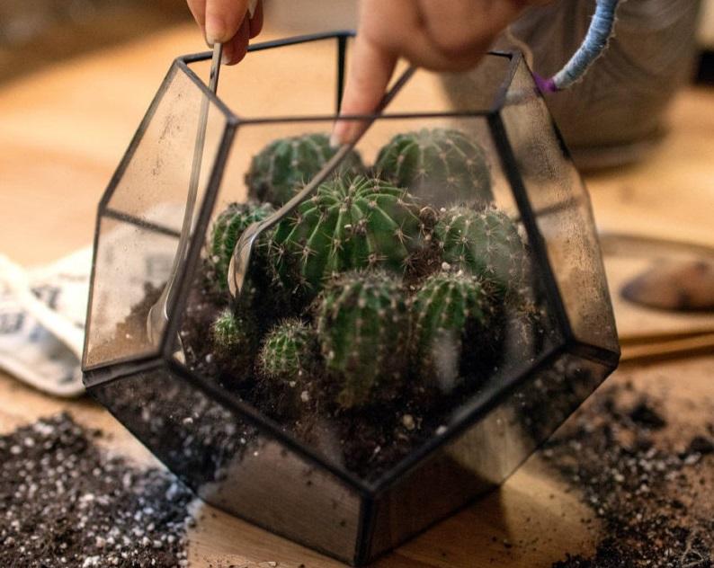 Мини-парничок для кактуса