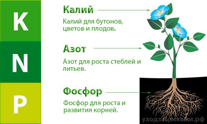 Калий, азот и фосфор для растений