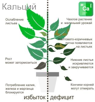 Недостаток и избыток кальция в растениях