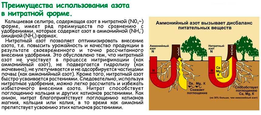 Преимущества кальциевой селитры