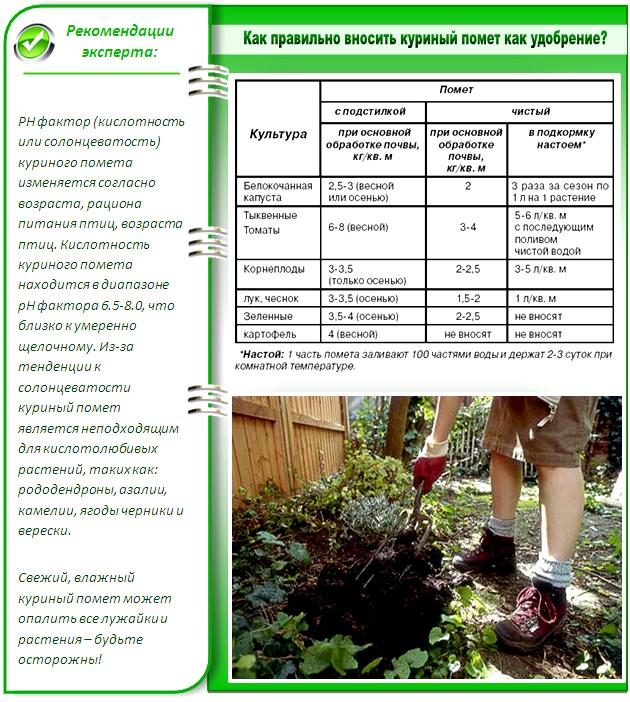 Птичий помет - дешевое и качественное удобрение для огорода