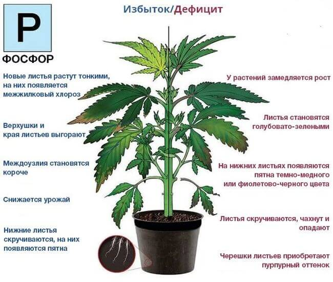 Недостаток и избыток фосфора - действие на растения