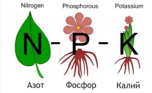 NPK-удобрение
