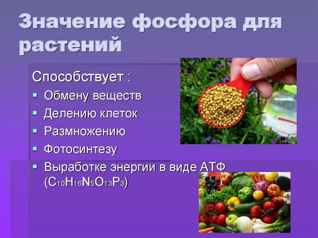 Значение фосфора для растений