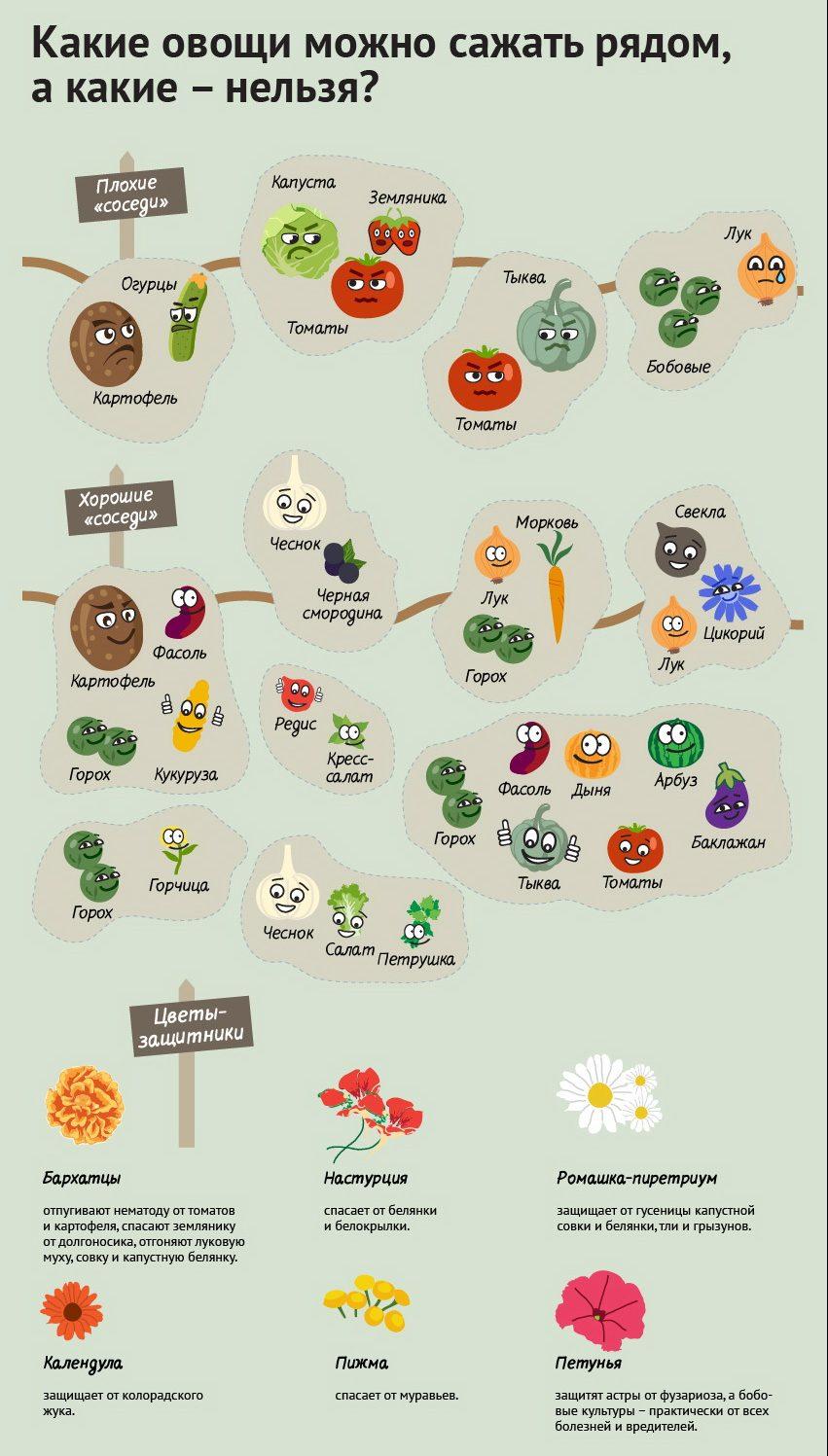 Плохие и хорошие соседи из овощей