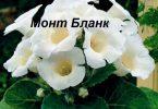 монт бланк