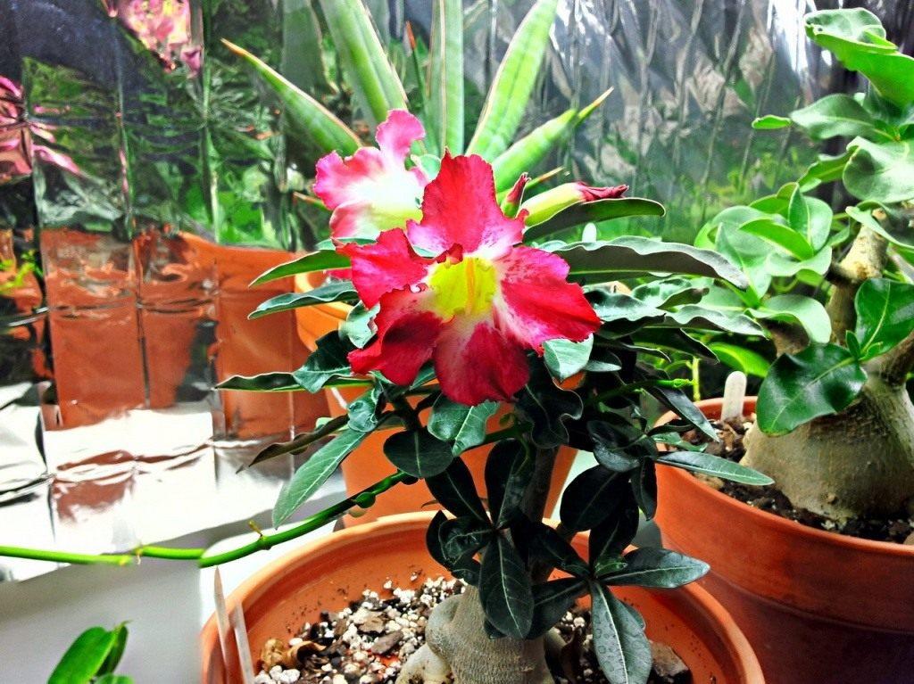 Красивый цветок в горшке